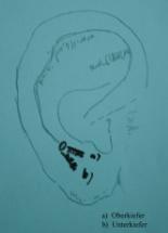 Akupunkturpunkte Ohr